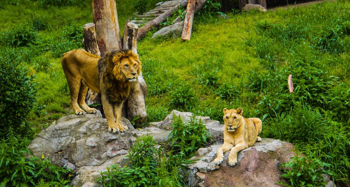 Ningbo Youngor Zoo Admission Ticket