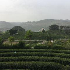 칭주산 다원 여행 사진