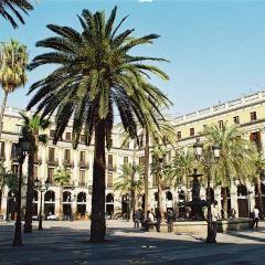 Placa Reial User Photo