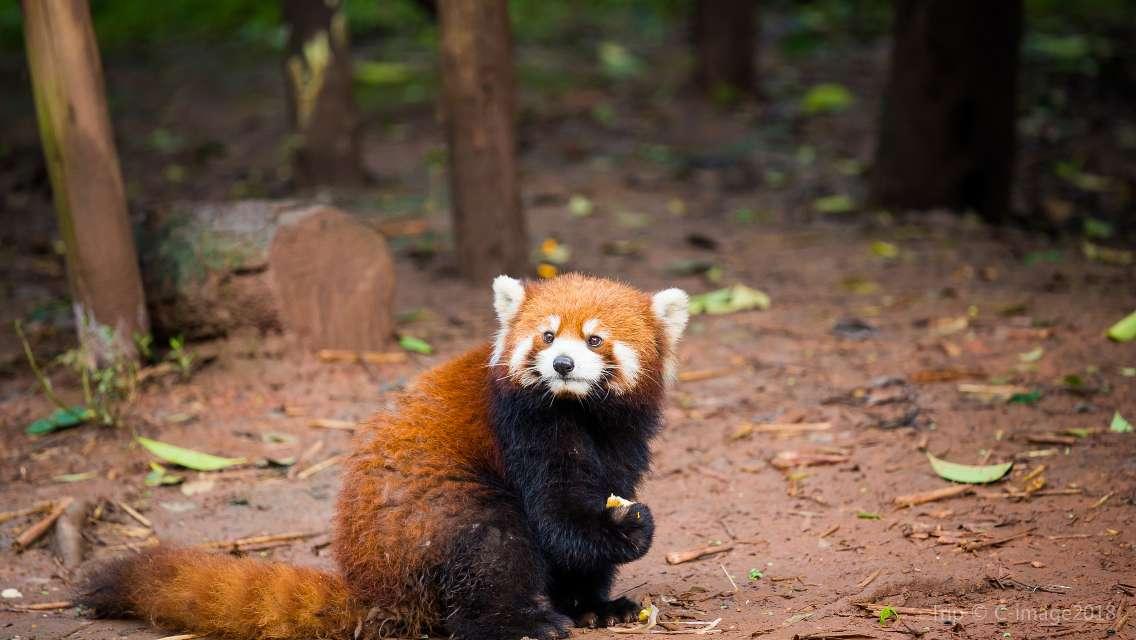 Chengdu Zoo Ticket