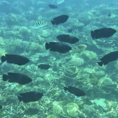 Flora Bay用戶圖片