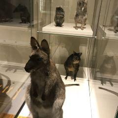 艾伯塔皇家博物館用戶圖片