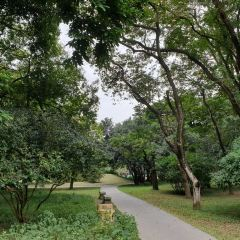 中國科學院華南植物園張用戶圖片