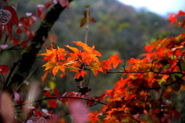 The Best Places in Sichuan to Experience the Beauty of Autumn