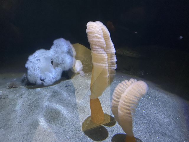 溫哥華水族館