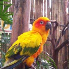 布吉百鳥園用戶圖片