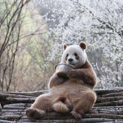 Foping Panda Valley User Photo