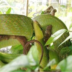 Ao Nang Snake Show用戶圖片