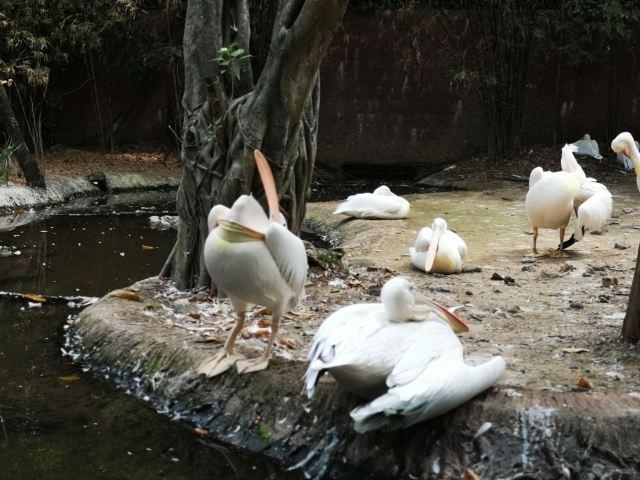 Thungyai - Huai Kha Khaeng Wildlife Sanctuaries