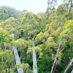 Otway Fly Treetop Adventures User Photo