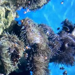 Van Kleef Aquarium User Photo