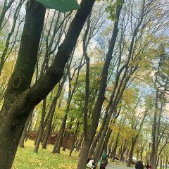 高爾基公園用戶圖片