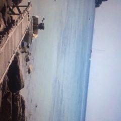 猴子海灘用戶圖片