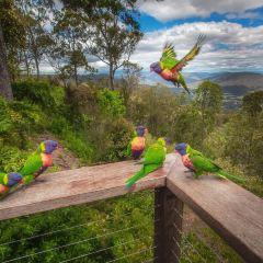 Tamborine National Park User Photo