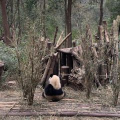 Chengdu Research Base of Giant Panda Breeding User Photo