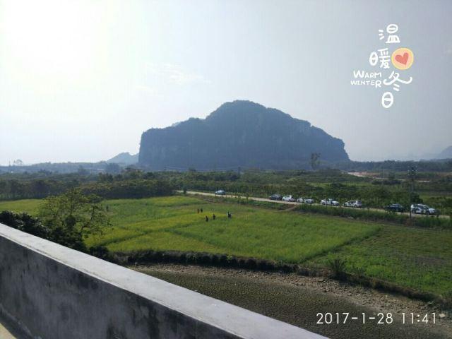 Tangjiawan Rapeseed Flower Field