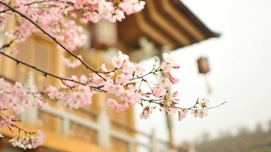 杭州櫻花園