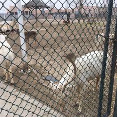 Golden Deer Homes User Photo