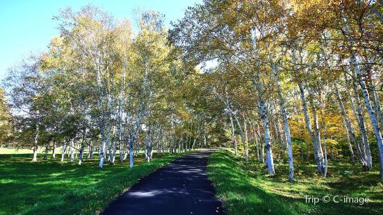 Makomanai Park