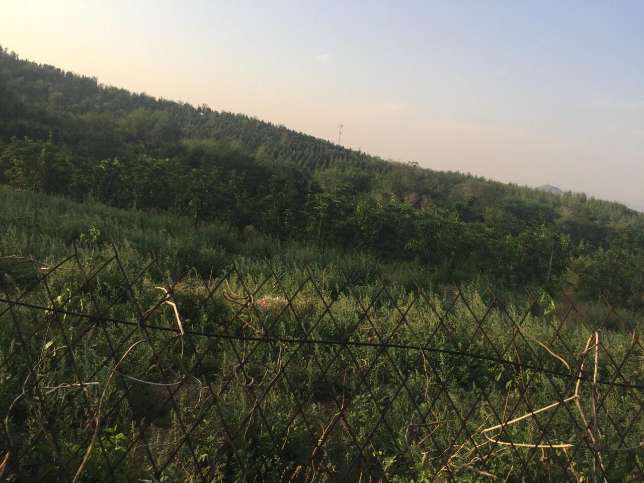 Yandong Ecological Park