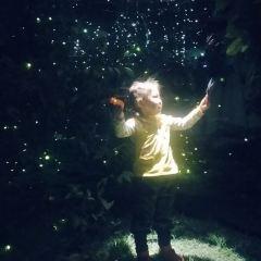 Firefly Starry Sky Art Museum User Photo