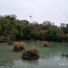 Japanese Tea Gardens User Photo