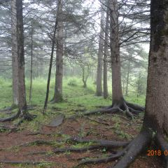 Tongtianhe National Forest Park (South Gate) User Photo