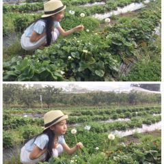 Sorell Fruit Farm用戶圖片