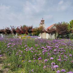 Hanzhong Lavender Garden User Photo