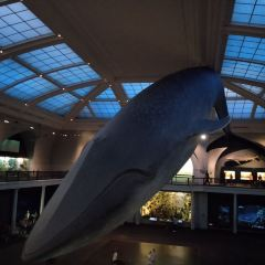 Blue Whale User Photo