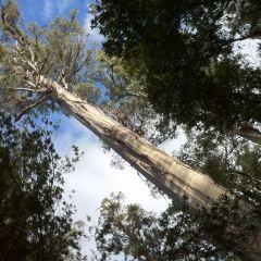Mount Field National Park User Photo