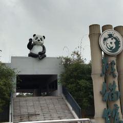China Bamboo Art City User Photo