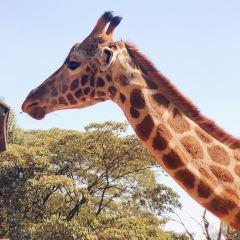 長頸鹿中心用戶圖片