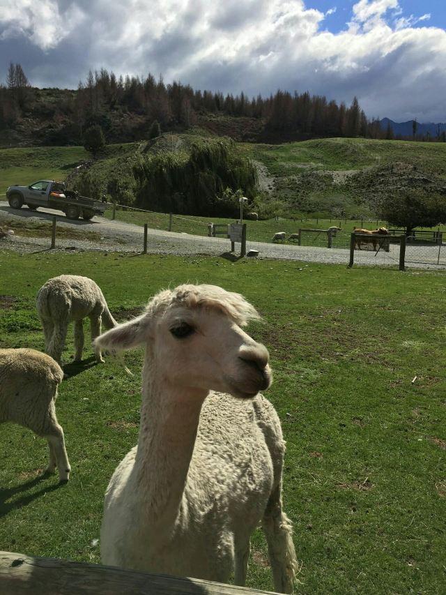 Mount Nicholas Farm Experience