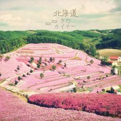 Flower Land Kamifurano User Photo