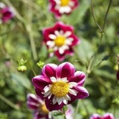 Geelong Botanic Gardens User Photo