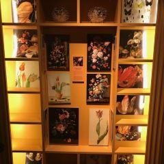 阿姆斯特丹鬱金香博物館用戶圖片