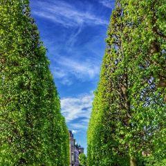國王花園用戶圖片