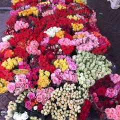 Singel Flower Market User Photo