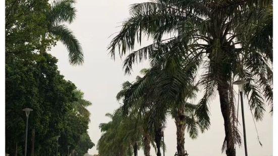 沿着顺化香江逛了一逛,因为下雨天所以这里没什么人,周围两边布