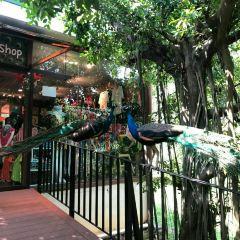 Penang Bird Park User Photo