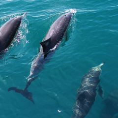 Auckland Whale & Dolphin Tour User Photo