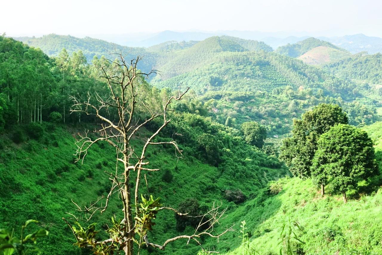 Dawang Mountain Forest Park