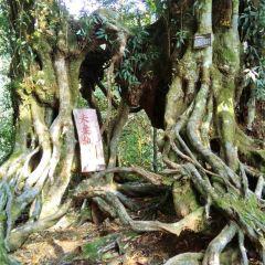 Dawei Mountain National Park User Photo