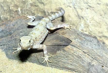 Gecko Centre
