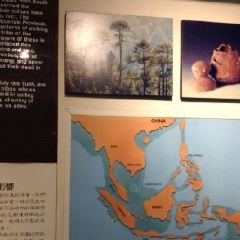 바하이 치노이 여행 사진