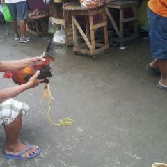 Carbon Market User Photo