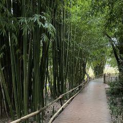 翠湖公園用戶圖片