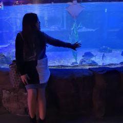 釜山水族館張用戶圖片