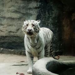 Saigon Zoo And Botanical Garden User Photo